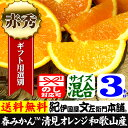 フルーツ オレンジ かんきつ