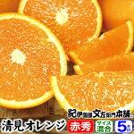 紀州有田清見オレンジ5kg【ギフト選別】