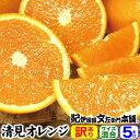 訳あり春柑橘 『清見オレンジ』5kg【送料無料】紀州有田の春かんきつ春みかん お買得わけあり選別/有田みかんの本場 …