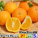 ネーブルオレンジ 5kg【訳あり】【B級品】(和歌山県有田産)/サイズ選別無し・サイズおまかせ5キロ 春柑橘 春みかん…