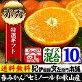 美味しい春みかん・セミノールオレンジ10kg【送料無料】和歌山県産・紀州有田産・贈答用選別品・ギフトに最適な果物・果汁(ジュース)たっぷりの濃厚柑橘を産地直送・美味しい春みかん