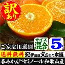 わけあり春かんきつ『セミノールオレンジ』【送料無料】和歌山県産・紀州有田産 【キズ】(買得品5kg)ご家庭用・果…