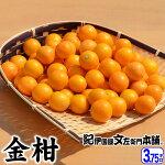 金柑(きんかん)3.75kg和歌山産