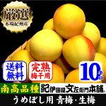 【完熟】紀州産厳選青梅品種=南高【梅酒・梅干用】