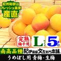 紀州産青梅品種=南高【梅酒・梅干用】L/5kg入【クール冷蔵便発送】