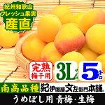 紀州産青梅品種=南高【梅酒・梅干用】3L/5kg入【クール冷蔵便発送】