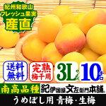 紀州産青梅品種=南高【梅酒・梅干用】3L/10kg入【クール冷蔵便発送】