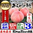 紀州和歌山 あら川の桃(早生白鳳品種)手選り【秀選】 3kg/10〜11玉入・送料無料