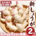 フレッシュ新しょうが2kg入和歌山県産 【送料無料】紀ノ川河口で栽培されている高品質の新生姜を新鮮 産地直送自家製 …