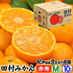 紀州有田「田村みかん」特選ギフト品【Mサイズ】10kg自信のお味、抜群の美味しさです。こちらの田村みかんは1月12日頃の発送にて今季最終出荷となります。
