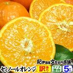 わけあり春かんきつ『セミノールオレンジ』【送料無料】和歌山県産・紀州有田産【キズ】(買得品5kg)ご家庭用・果汁(ジュース)たっぷりの濃厚柑橘を産地直送