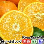 セミノールオレンジ5kg【送料無料】和歌山県産・紀州有田産・贈答用選別品・ギフトに最適な果物・果汁(ジュース)たっぷりの濃厚柑橘を産地直送・美味しい春みかん
