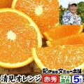 紀州有田豊作会清見オレンジ5kgサイズおまかせ【送料無料】