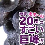 朝穫り【即日発送】紀州金屋産巨峰2kg(露地栽培)