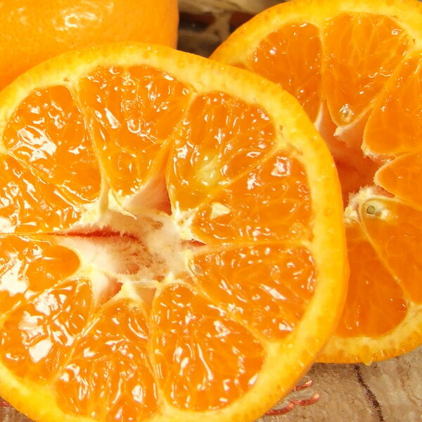 紀州有田産/春みかんポンカン5kg/ご家庭用わけあり果実B級品 春かんきつ産地直送