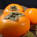 送料無料・和歌山の柿(贈答用)西浦さんちのフレッシュ富有柿約3.5〜4kg[12〜16個入] 【青秀】ギフト・和歌山県産…
