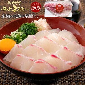 匠が育てた極上の鯛 タイ たい 刺身 1500g 刺身はもちろんのこと、塩焼き、しゃぶしゃぶ、ソテー、握り等数々の料理におすすめです。