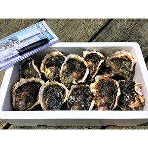 バーベキューセット 岩牡蠣 20個(約3kg)加熱用(牡蠣ナイフ、片手用軍手付)能登産 BBQ