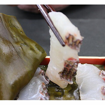 タイ 鯛 昆布締め刺身【天然・富山湾産を使用】【産地直送】【富山】