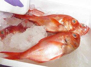 【送料無料】天然 国産 金目鯛 キンメダイ 2尾(各約1kg) 【冷凍】