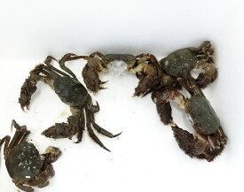 【送料無料】日本の上海蟹 モクズガニ 3匹セット【天然】【冷凍】