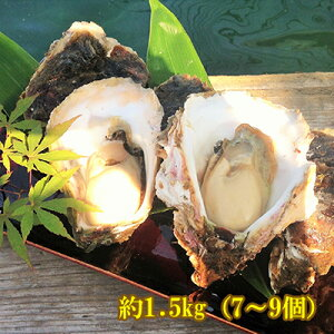 【検査済】能登産 岩牡蠣 約1.5kg(7〜9個)(生食用)(専用ナイフ、片手用軍手付)