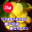 瀬戸田産 樹なりレモン(化学農薬不使用栽培)3キロ【送料無料】【檸檬】国産レモン