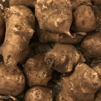 菊芋 生 3キロ 送料無料 無農薬 国産 土付き きくいも 3kg
