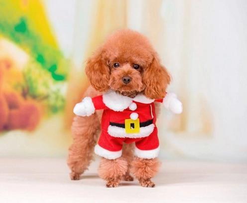 【サンタクロースコスプレ】クリスマス コスチューム 帽子付き【猫服 衣装 クリスマス 衣装 ペット服 スーツ猫 】イベント パーティー