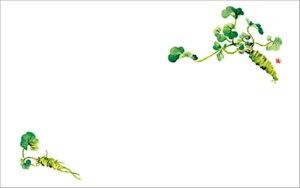 テーブルマット尺3#206 わさび ◆ご注文単位:1冊(100枚入) 業務用 キッチン用品 厨房用品 食器 居酒屋 おしゃれ食器 創作料理