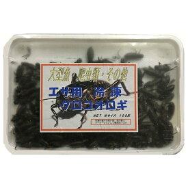 【クール便発送】 冷凍 国産フタホシ黒コオロギ Mサイズ 100g 約100匹入り