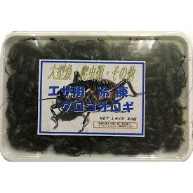 【クール便発送】 冷凍 国産フタホシ黒コオロギ L サイズ 100g 約80匹入り