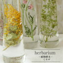 【あす楽対応品】【Healing Bottle】ハーバリウムボトル ミモザ−植物標本−母の日ギフト