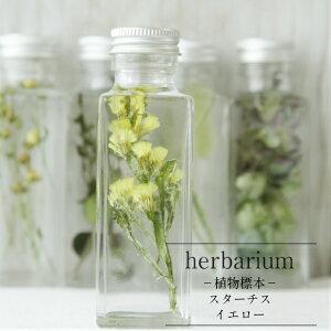 【あす楽対応品】【HealingBottle】ハーバリウム角ボトル<スクエアミニ>スターチス<イエロー>−植物標本−母の日ギフト