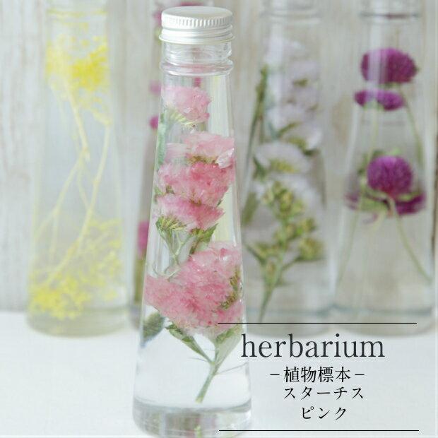 【herbarium Bottle】ハーバリウムボトル スターチス<ピンク>−植物標本−プチギフト