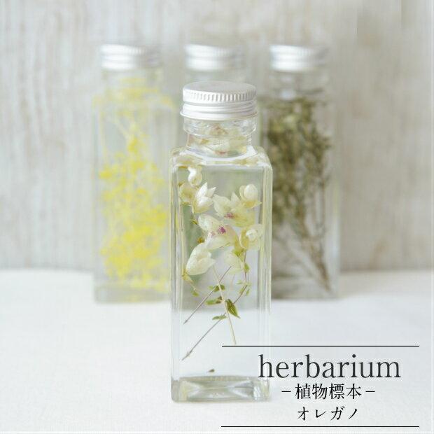 【herbarium Bottle】ハーバリウム角ミニボトル オレガノ−植物標本−母の日ギフト