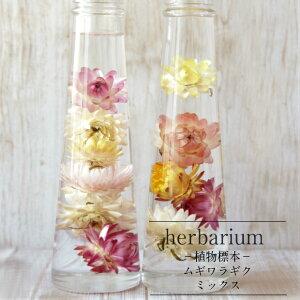 【herbariumBottle】ハーバリウムボトルペッパー<ムギワラギク>−植物標本−ギフト