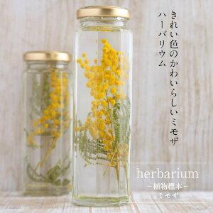 【herbariumBottle】ハーバリウムボトル八角ボトルLサイズ【long】花<ミモザ>−植物標本−