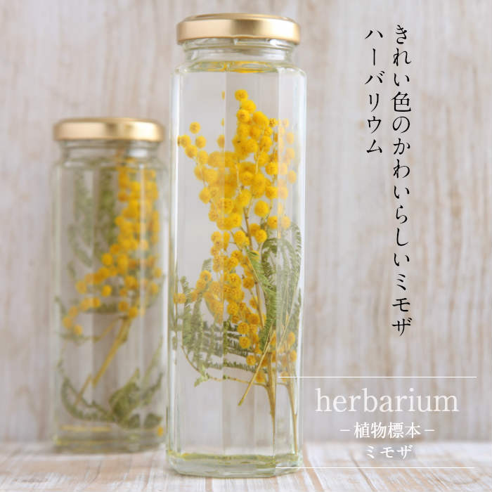 送料無料【herbarium Bottle】ハーバリウムボトル八角ボトルLサイズ【long】花<ミモザ>−植物標本−