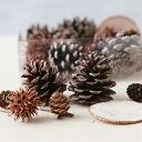 【花材】森の木の実の詰め合わせ詰め合わせクリスマスリース作り、スワッグ、ハーバリウムやアロマキャンドル。サシェ…