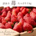 訳ありいちご【送料無料】信州のくだもの苺1kg!【生果実・加工用】不揃いいちご<ただいまの品種は夏いちごのすずあ…