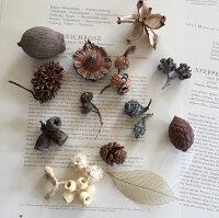 ドライ詰め合わせ【木の実】【モス】【ユーカリの葉】【ドライフラワー】【ハーバリウム作り】【植物標本】【ウェディング】