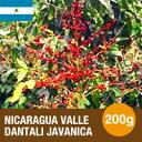 ニカラグア バジェ・ダンタリ ジャバニカ 200g