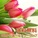 ひな祭り ホワイトデー 母の日 チューリップ 花束 花 チューリップ花束 10本 贈り物 ギフト 選べる 赤 ピンク イエロ…