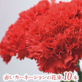 敬老の日 赤いカーネーションの花束 10本【フラワーギフト】ギフト 贈り物 プレゼント お祝い