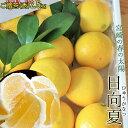 宮崎県産 ひゅうがなつ 【日向夏(秀)2.5kg】(12-15玉前後入ります!直径7〜10cm位です) 春のさわやかな香りとみず…