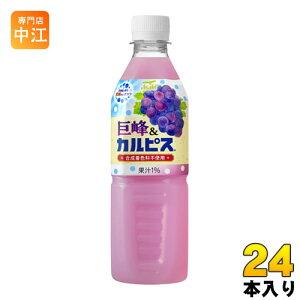 アサヒ カルピス 巨峰&カルピス 500ml ペットボトル 24本入〔乳性飲料〕