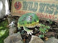 デカサイズ!カエルのリアルオブジェ(ベルツノガエル)■アメリカ雑貨アメリカン雑貨