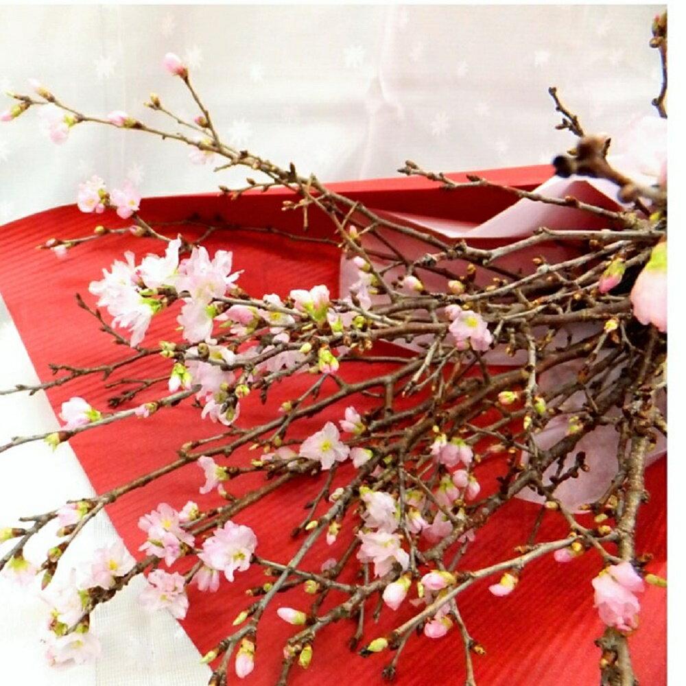 桜の花束 プレゼント 卒業式 卒業祝い 卒業 さくら サクラ 切り花 フラワーギフト