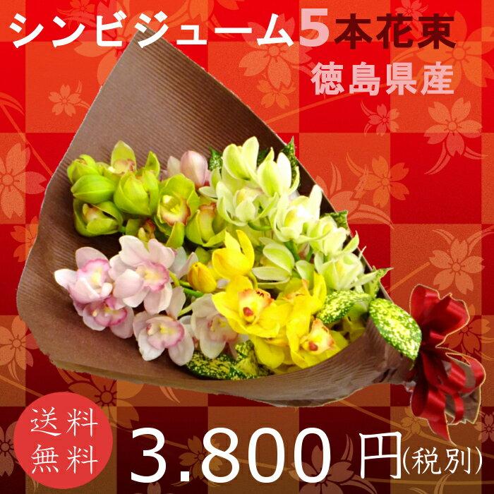 徳島県産シンビジュームの花束 5本 蘭 送料無料【シンビジューム 花束 送料無料】